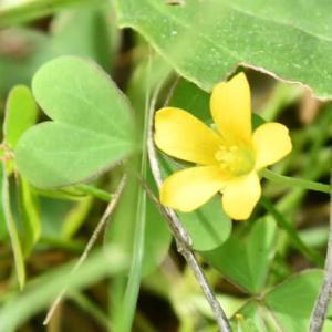 黄色い愛の花?