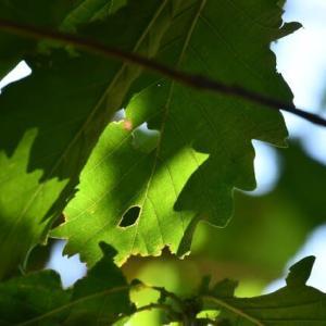 葉の光と影…