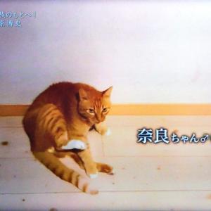 情熱大陸ネコ探偵藤原博史(51歳)は猫の立場に立って行動する