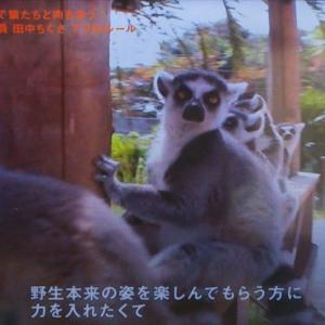 セブンルール日本モンキーセンター田中ちぐさは野生の守り神