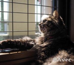 猫窓びより