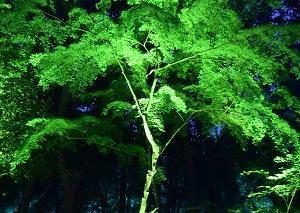 糺の森、光のまつり