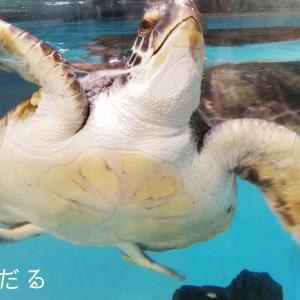 【高知でおでかけ】むろと廃校水族館に行ってきた!