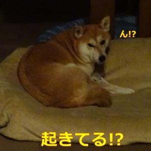 ん!?起きて・・・るぅ?