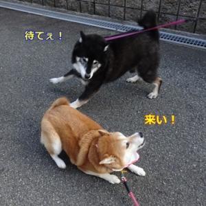 キレッキレの走り!