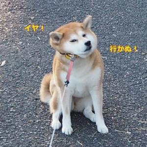柴犬とは?