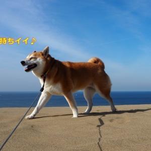 Go To 鳥取砂丘!