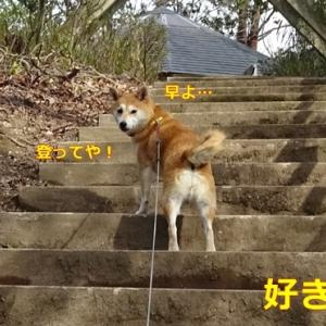 階段が好きやん!