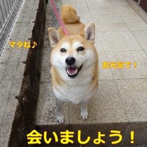 チーム『柴犬ナツ』 無期限休業のお知らせ。