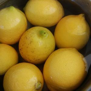 レモンを摘みました