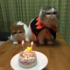 ハロウィン&ちゃまる2歳のお誕生日