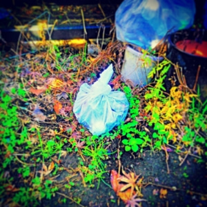 母の生ゴミ処理