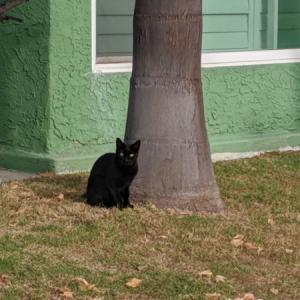 御近所猫 124