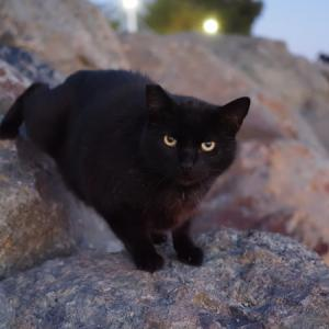 臨海猫 495