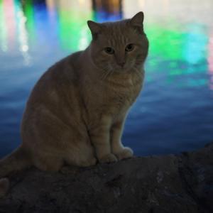 臨海猫 498
