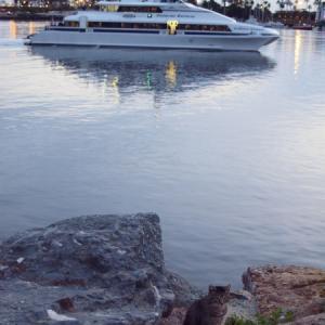 臨海猫 499