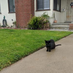御近所猫 132