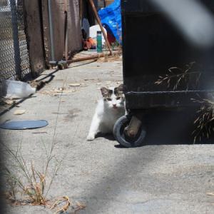 御近所猫 133