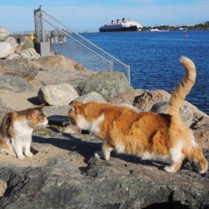 臨海猫 505
