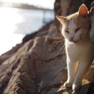 臨海猫 507