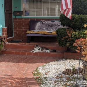 御近所猫 135