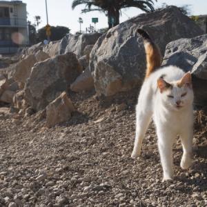 臨海猫 511