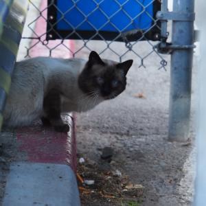 御近所猫 137