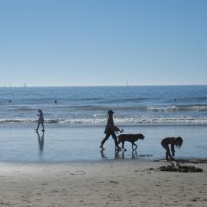 11月のベニスビーチ 8