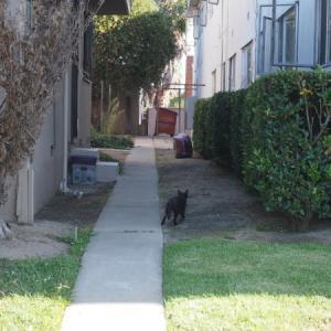御近所猫 144