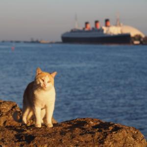 臨海猫 546