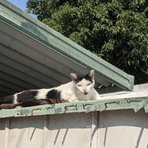 御近所猫 146