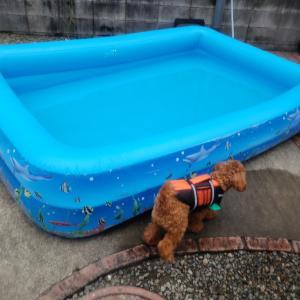 RUMくん、大きいプールで練習♪