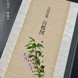 櫻撫子文庫〜美しい桜の本をホテルで購入しました!〜