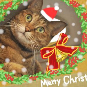 メリークリスマス猫2019