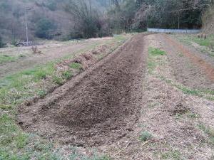 今日もやります・・ズッキーニ畝作りです