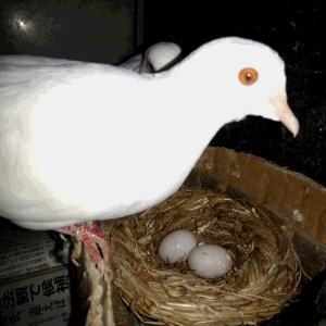 卵を産みました