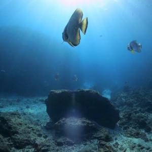 沖縄で初めての釣りさぁへのサービス!沖縄にいるなら釣りをやりなさい!!