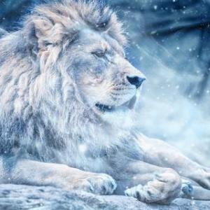 【星使いの時刻表】太陽の獅子座入り~制限を超えて成長する