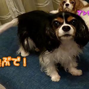 パチュリーヌ☆妄想の話。