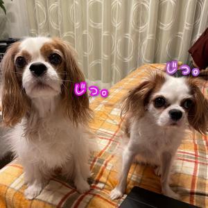 食いしん坊コンビ☆