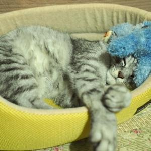まだ冬眠中 タマオ君元気です