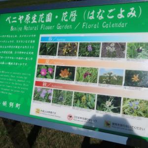 ベニヤ原生花園は今の時期としては素晴らしい花が迎えてくれる (2020/8/9)