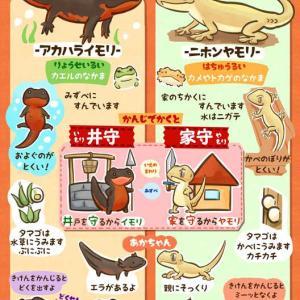 Gecko and Newt ~ヤモリとイモリ~
