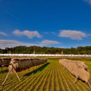 残したい昭和の原風景「はさがけと東上線」