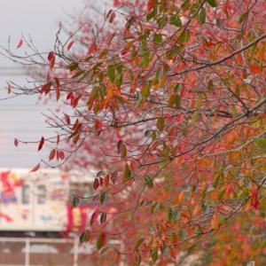 秋の桜と東上線