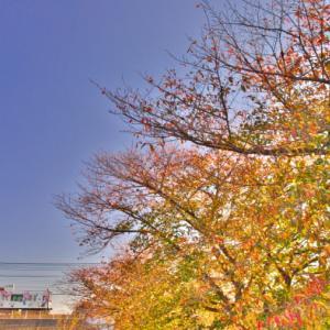 東上線to朝の斜光線de紅葉が映える