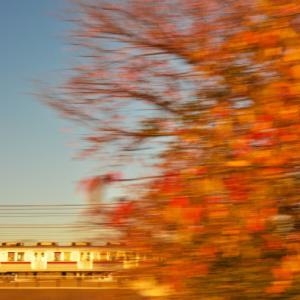紅葉to夕陽ギラリ9101F&ピカピカ東京メトロ7105F