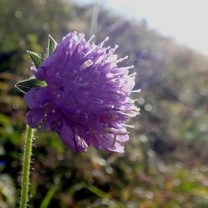 オーバーグルグルハイキングで撮影した花(3)