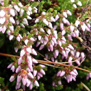 オーバーグルグルハイキングで撮影した花(2)
