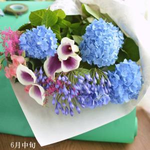 紫陽花で季節の移ろいを感じて!おうち時間が充実するお花のお届け便